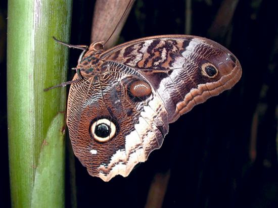Image courtesy swallowtailgardenseeds.com